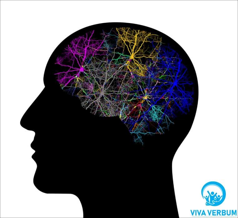 Viva Verbum vrši usluge neuropsihološke rehabilitacije dece i odraslih (teškoće sa pažnjom, koncentracijom, pamćenjem, mišljenjem, orijentacijom, govorom)